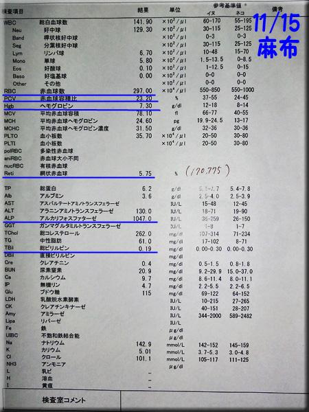 result1115azabu.jpg