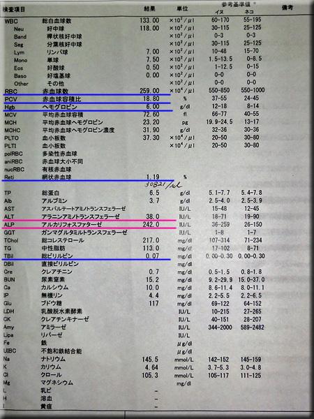 result120608azabu.jpg