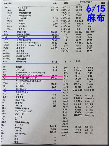 result120615_1azabu.jpg