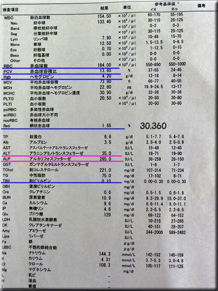 result120703azabu.jpg